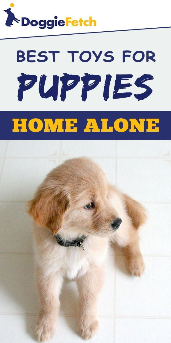 Best Toys For Puppies Home Alone Buying Advice Top 5 Reviews For 2017 Best Toys For Puppies Puppies Cool Toys