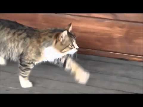 Katze läuft wie ein Pferd - YouTube horse-like