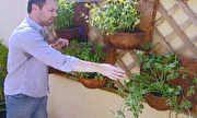 Jornal Hoje - JH mostra que é possível cultivar hortas mesmo em pequenos espaços | globo.tv
