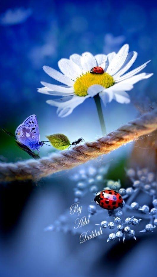 Pin Von Anke Kruger Auf Marienkafer Blumen Bilder Blumen Bilder