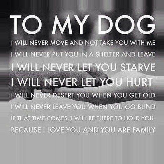 To my dog