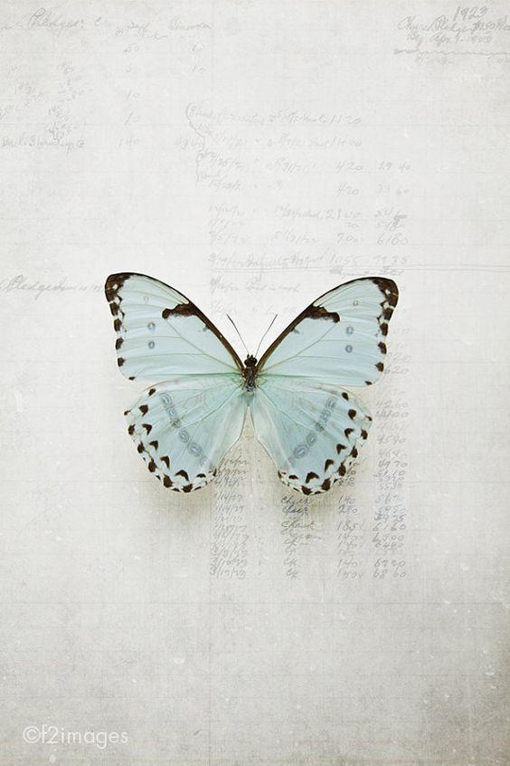 淡い水色の蝶