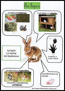 Fiche d 39 identit le lapin cycle 1 pinterest - Comment couper les ongles d un lapin ...