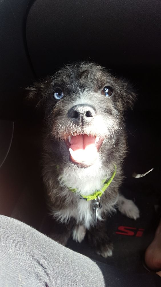 This is Apollo