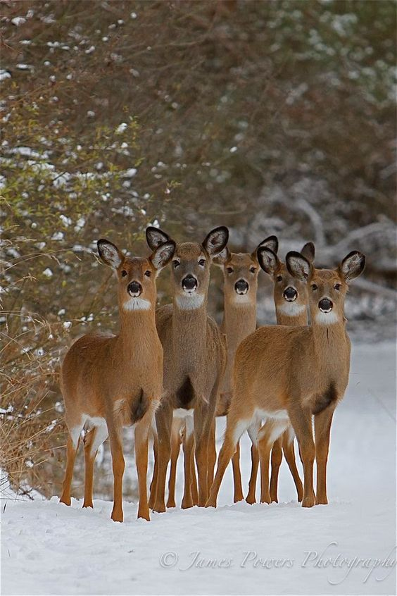 Winter Wildlife: