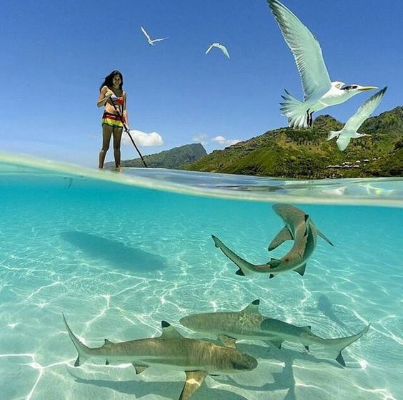 Paddle Boarding with friends in Bora Bora French Polynesia. Tag who you'd do this with. Courtesy of @chrismclennan