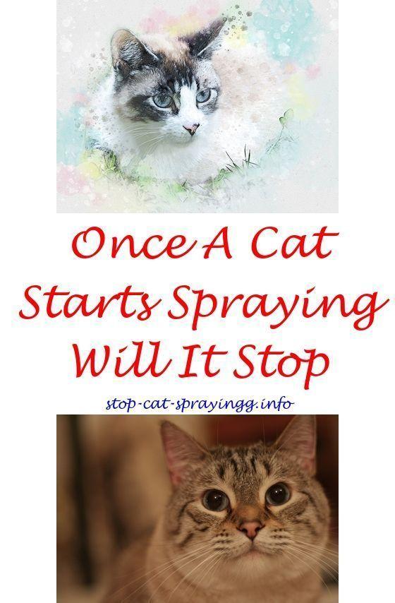 6a4835d08307434c22f15666b682638c - How To Get Rid Of Cat Spray Smell Under House