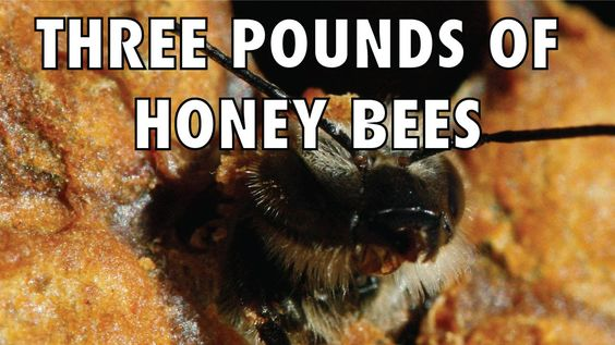 Three Pounds of Honey Bees