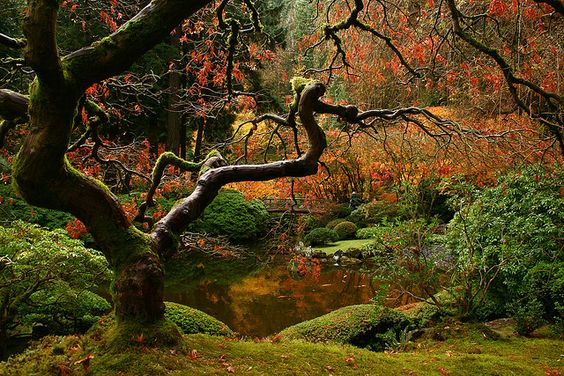 Japanese Maple at the Portland Japanese Garden