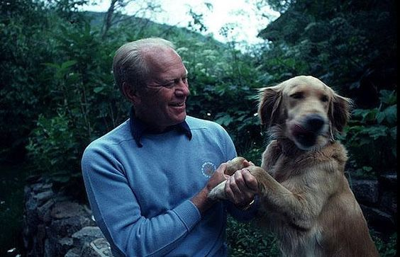 Misty, a Golden Retriever, was a Ford family dog. She was the puppy of Liberty.