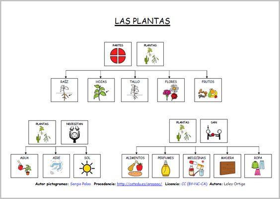 Materiales las plantas mapas conceptuales mapas for Funcion de las plantas ornamentales