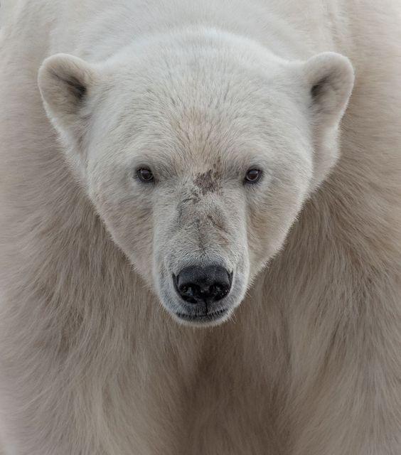Les Authentiques Tigre 20 cm de Histoire d'ours
