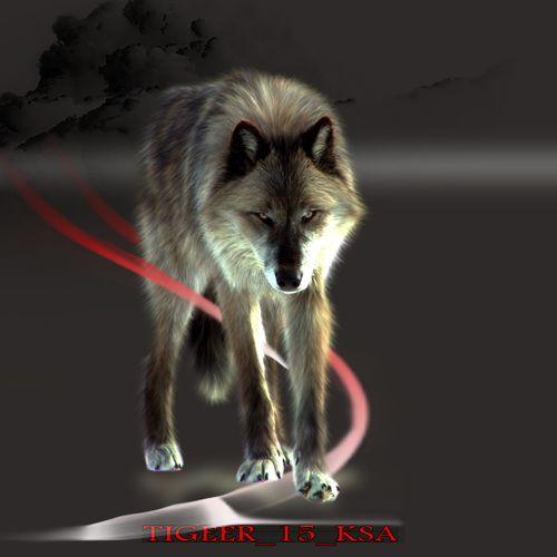 صور ذئاب صور ذئب مكتوب عليها كلام Wolf Pictures Fox Animals