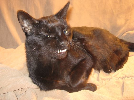 Black cats with beautiful smiles