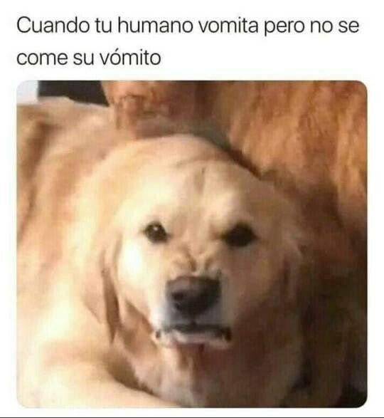 Los Perros No Entienden A Los Humanos Funny Memes Humor Memes