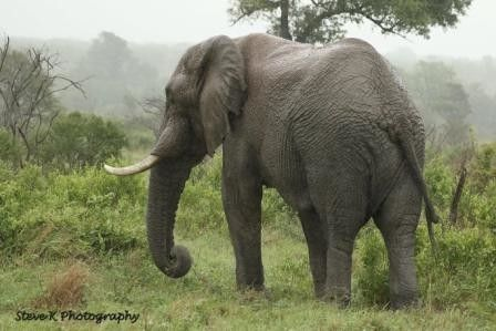 AFRICAN ELEPHANT | A community of wildlife photographers to share their photographs, experiences and follow other wildlife photographers.