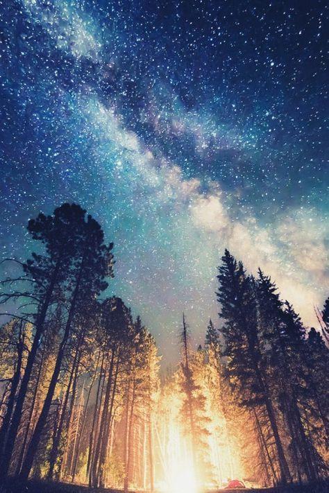 輝く森と天の川