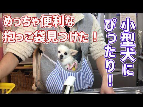 Lmao Animals おしゃれまとめの人気アイデア Pinterest Iamannoyingasheck 小型犬 チワワ 犬
