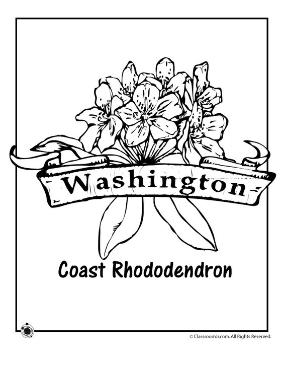 Minnesota State Flower Coloring Page Woo Jr