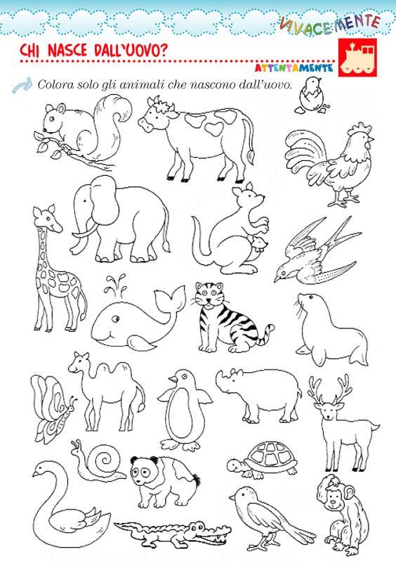 Disegni Da Colorare Animali Ovipari Coloradisegni