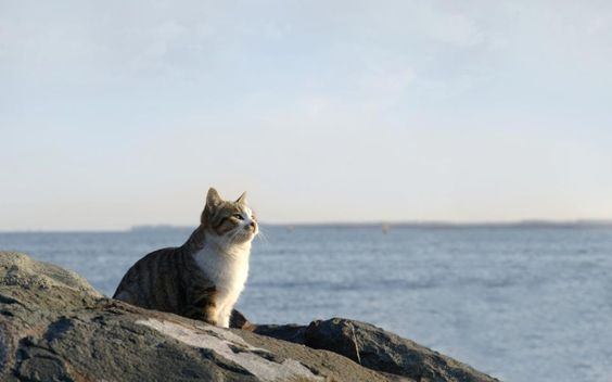 Old Cat and the Sea