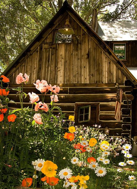 Cabin Poppies And Daisies On Pinterest