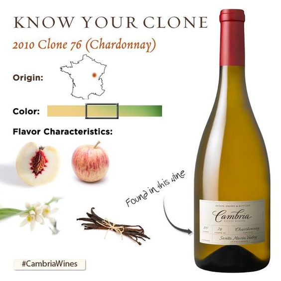 Clone /klōn/: A variation of a of grape that exhibits different characteristics than the original vine. In winemaking, choosing clones for these differences can enhance certain aspects of the grapes and wine.