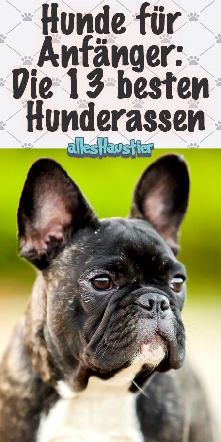 Hunde Fur Anfanger Das Sind Die 13 Besten Anfangerhunde