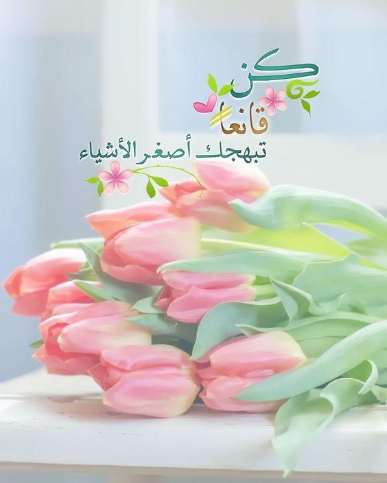 Pearla0203 On Instagram ك ن قانع ا ت بهجك أصغ ر الأشياء ㅤㅤㅤㅤㅤㅤㅤㅤㅤㅤㅤㅤㅤㅤㅤㅤㅤㅤㅤㅤㅤ مساؤكم Flower Phone Wallpaper Islamic Messages Islamic Wallpaper
