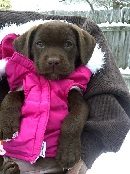 Most precious pup! It reminds me of my sweet Scout when she was a baby. Lil teddy bear!