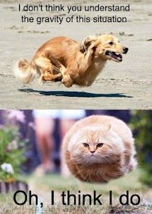 Hover Dog vs Hover Cat ...which is superior?