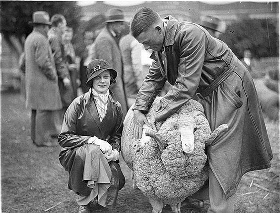 A judge opening the fleece of Mrs Matthews' Merino ram, 1930s / Sam Hood by State Library of New South Wales collection, via Flickr
