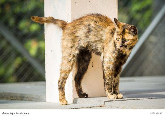 Probleme mit unsauberen Katzen? Wir wissen Rat: http://blib.it/2y