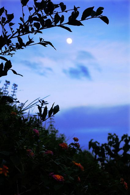 Moonlit Evening At Saatchhari Rain Forest, Bangladesh. by sytoha / Syed Touhid Hassan, via Flickr