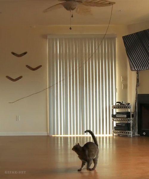 Fitness first – Das DIY-Workout für Katzen