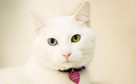 - Fotógrafa especializada em gatinhos dá dicas de como retratá-los - 22/05/2012