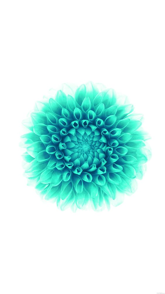 Tap and get the free app nature turquoise flower white - Turquoise wallpaper pinterest ...