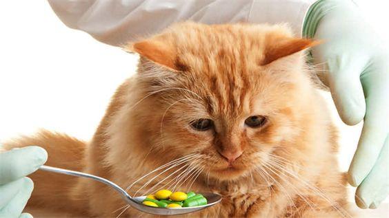 貓兒是非常耐疼痛的動物,所以很會將牠們身體上的疾病隱藏起來,若想要知道貓咪生病與否,就有勞飼主平時耐心的觀察與關心了。小編要介紹幾種貓兒較易產生的病症以及治癒方式,一塊兒仔細深入閱讀吧!  http://petbird.tw/article9283.html
