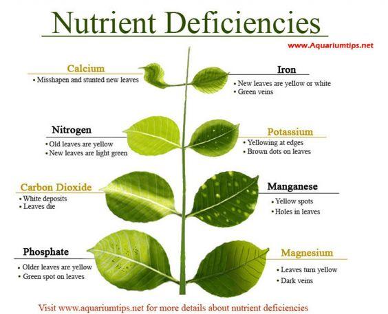 Aquarium plants nutrient deficiency