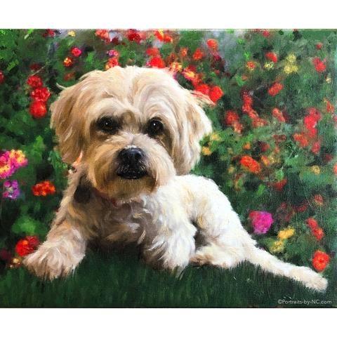 Lhasa Apso Poodle Mix Dog Portrait 671 With Images Dog