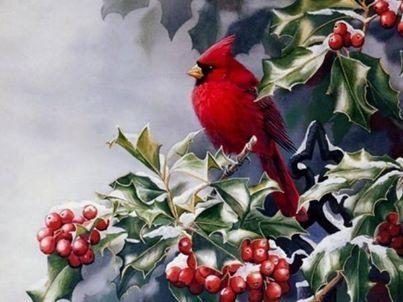 Cardinal in Holly Tree