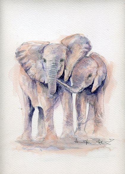 The David Sheldrick Wildlife Trust - Art Store: