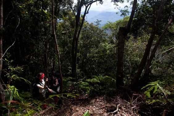 #Jungle #Malaysia #Trekking.  Read the full dispatch from the field: http://www.opxpeditions.com/malaysia/post/ginseng-camp-maliau-basin/