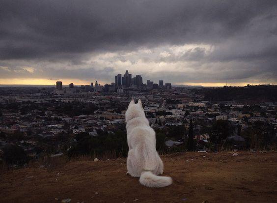 perro blanco fotos naturaleza