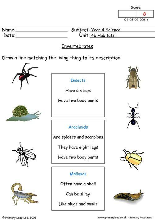 Primaryleap.co.uk - Science worksheet - Invertebrates | Science ...