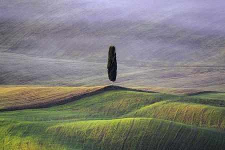 The Cypress  Photo by Renato R. — National Geographic Your Shot