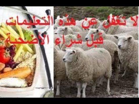 عيد الأضحى شروط اختيار الأضحية ليكون اللحم بجودة عالية لا تغفل عن هذه In 2020 Blog