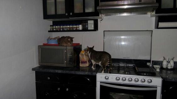 Así es; también son dueños de la cocina