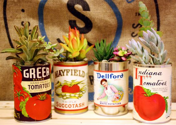 Vintage cans with succulents in them!