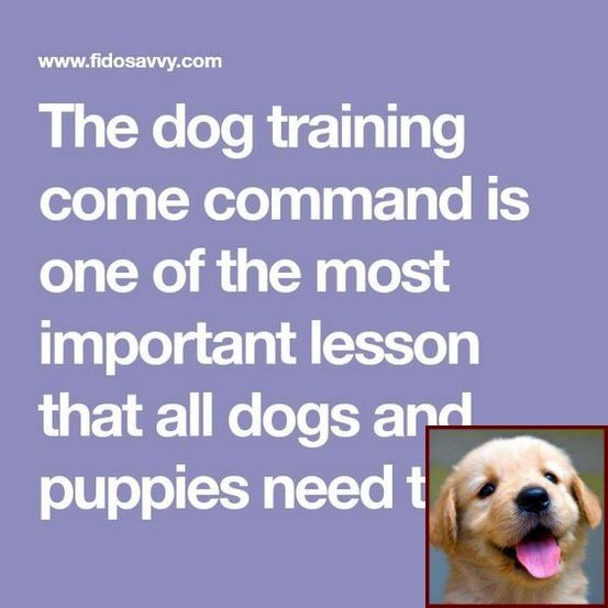 House Training A Puppy For Dummies And Dog Behaviorist Salary Dog Behavior Problems Dog Training Dog Behavior
